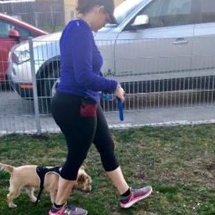 puppy loose leash walking