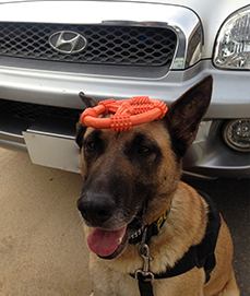 dog with toy on head