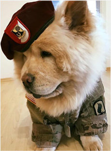 military dog training program